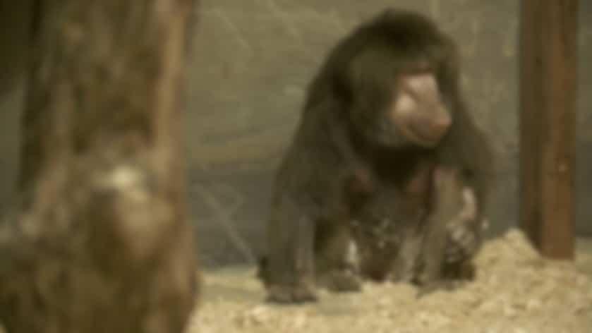 Un zoo pas comme les autres